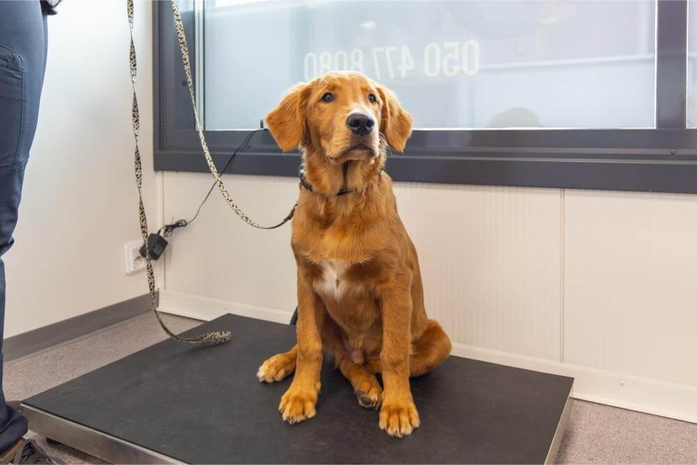 Eläinlääkäriasema Sun - Lemmikkien terveydenhoito